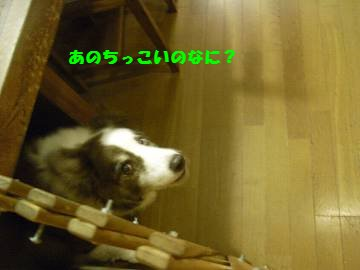 090610_0150001